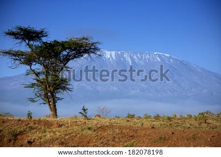 Kilimanjaro in Amboseli  - stock photo