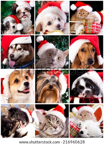 kitten and puppy with santa hats - stock photo