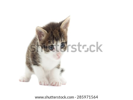 kitty on a white background isolated