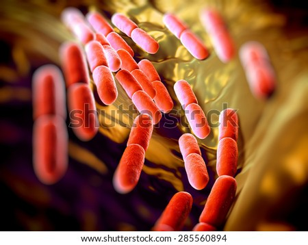 Lactobacillus bacteria. This lactic acid-producing bacteria is used in the production of yoghurt and other fermented products.they serve a protective role against more dangerous bacteria. - stock photo