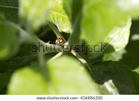 Ladybird on green Nature - stock photo