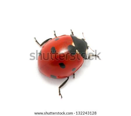 Ladybug isolated on the white - stock photo