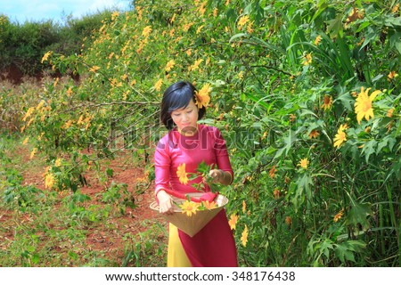 Lam Dong Province, Vietnam - November 7, 2015: wild sunflowers bloom everywhere on the plateau. A beautiful woman who wears pink traditional long dress is walking through wild sunflowers bloom