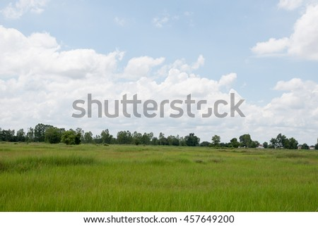 landscape. field and grass