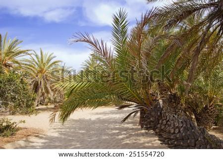landscape with palm trees, Crete, Greece  - stock photo