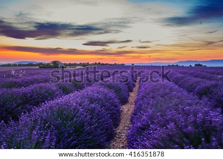 Lavanda fields of the French Provence near Valensole - stock photo