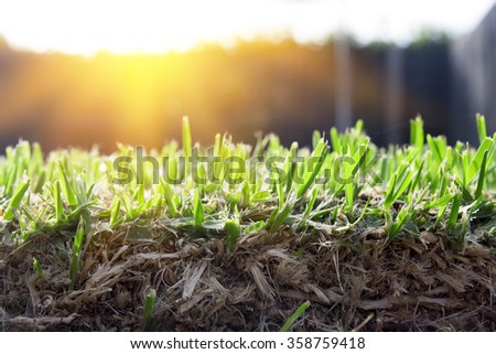 Lawn grass roots and soil - stock photo
