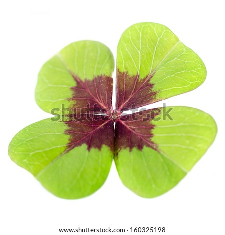 4-leaved cloverleaf before white background - stock photo