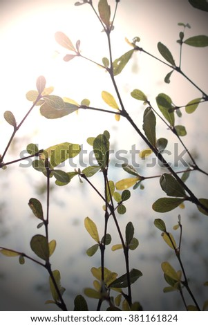 leaves and twig Tree on sky blurry lights background - stock photo