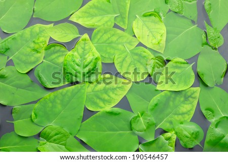 Leaves  lilac floating in the water, can be used as background