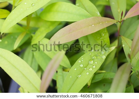 leaves with water drops,