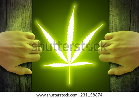 """Legalize cannabis marijuana"" concept. Marijuana leaf floating and glowing inside, after hand opened a wooden door. - stock photo"