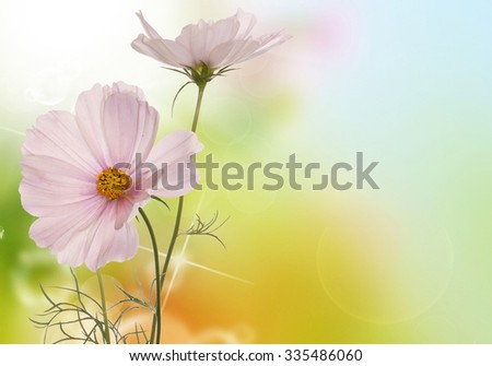 light pink flowers on a abstract background - stock photo
