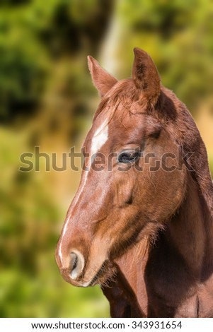 Little foal near the Falls  looking at photographer - stock photo