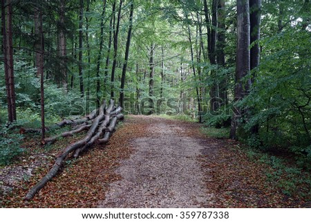 Logs near dirt road in forest in Swabia, Germany