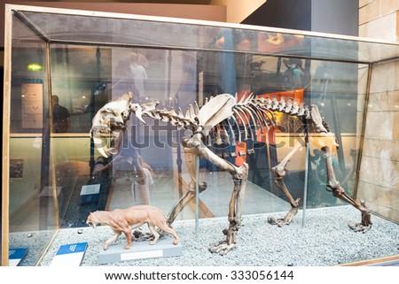 23. 07. 2015 LONDON, UK, Natural History museum - Exctinct mammals skeleton - stock photo