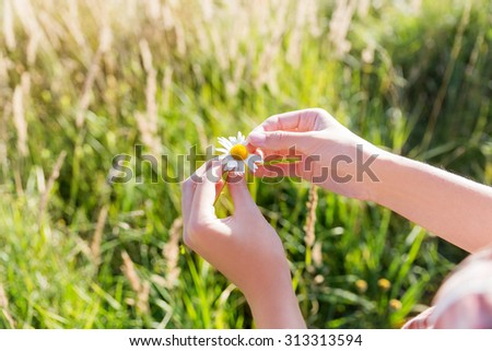 """""""Loves or not"""" guessing game with camomile flower. Women is plucking off the petals of a daisy. Natural summer background with green grass. - stock photo"""