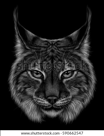 Black Lynx Stock Images, Royalty-Free Images & Vectors ...