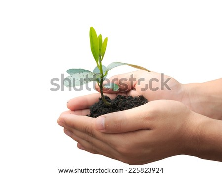 male hands holding young plant isolated on white background