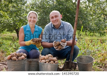 Man and woman harvesting potatoes in field - stock photo