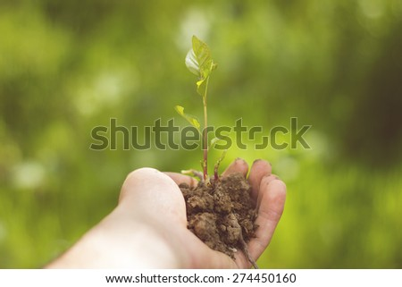 man holding young plant in hands  - stock photo