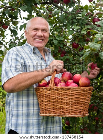 man in garden  picking apples.