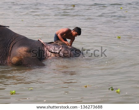 Man washing his elephant on the banks of river in Chitwan park in Nepal