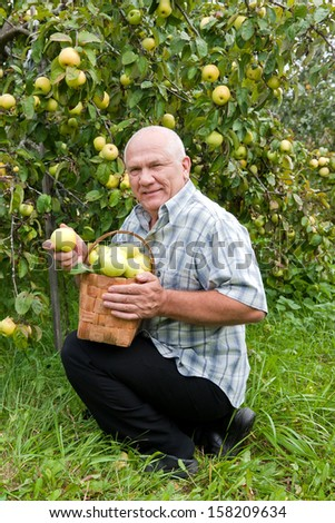 man with  basket of apples in  garden.