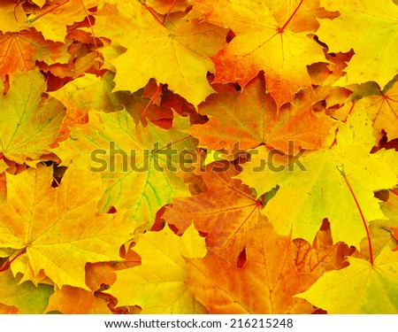 maple leaf as background