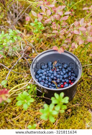Metal basket with blueberries  in wild forest