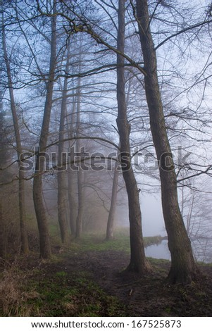 Misty forest with foggy morning.