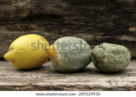 mold on lemon fruit - stock photo