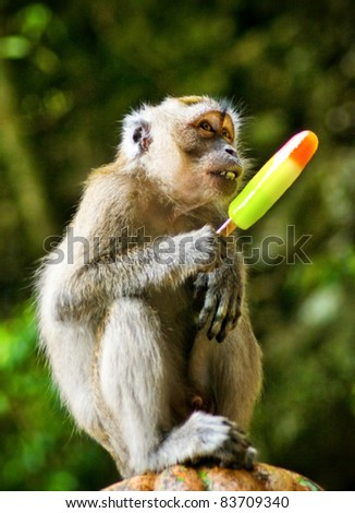 monkey eating ice cream in park