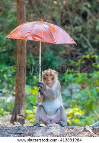 monky opening a colorful umbrella - stock photo