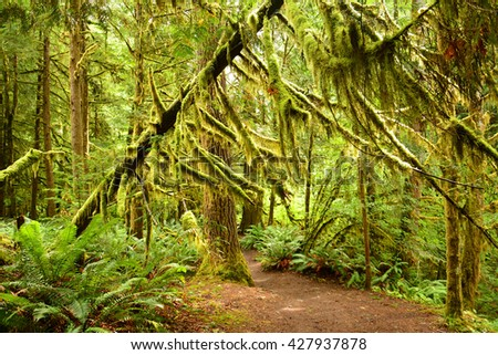 moss-covered trees  on the marymere falls hike, near lake crescent,  olympic national park, washington