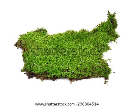 moss isolated on white bakground - stock photo