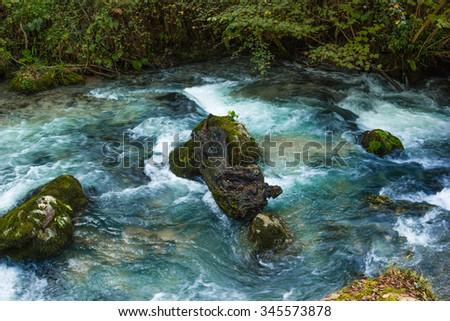 Mountain river flowing through the forest undergrowth