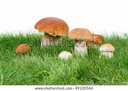 Mushrooms in grass and on white background