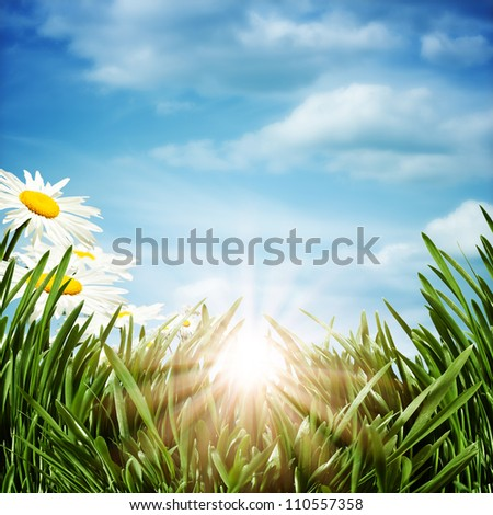 natural backgrounds with daisy flowers - stock photo