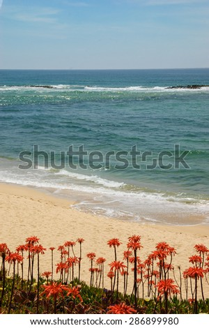 Ocean beach in Algarve, South of Portugal. Blooming Aloe Vera cactus flowers at foreground. - stock photo