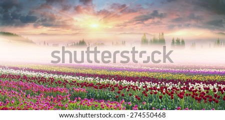 of different breeds on the backdrop of scenic wilderness after rain misty morning among bright spring greens in the mountains in the warm golden rays of sunrise sun-natural beauty of the Earth - stock photo