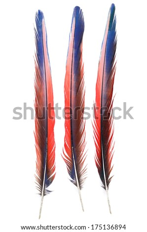 3 of Real MACAW bird Feathers. Quill. Natural colors: Blue, Red, Pink. Isolated on white background.  - stock photo