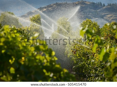 Okanagan Irrigation. A vineyard gets irrigated at dusk in the Okanagan Valley, British Columbia, Canada.