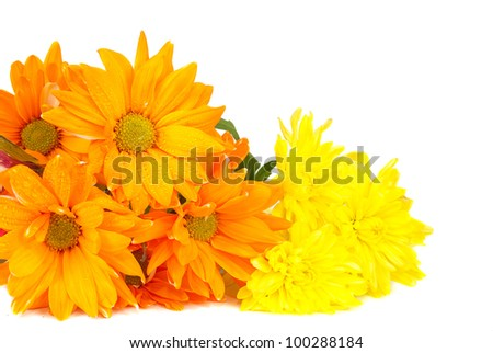 orange flowers blossom making  background