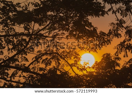 orange sunset with trees in bangkok , thailand