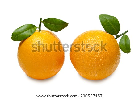 Oranges with leaves isolated on white background. Clipping path.