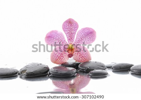 orchid and wet black stones with reflection