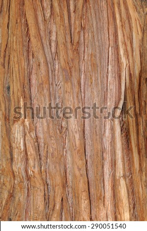 Pacific red cedar bark - stock photo