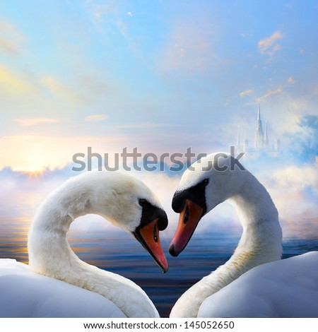 pair of swans in love floating on the water at sunrise of the day - stock photo