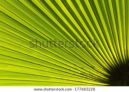 palm leaf backlit with sunlight shining through